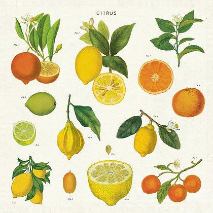 Vintage Citrus 100% Cotton Napkins Set of 4