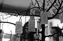 Wishing-Tree-Guestbook.jpg