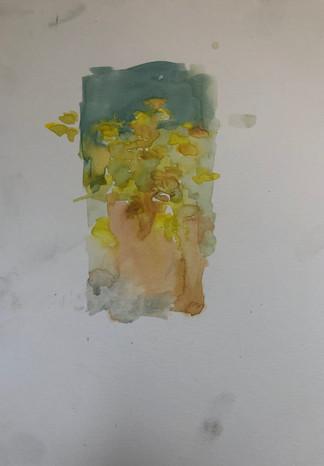 Morning Yellows