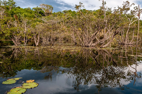 Paisagens Amazonicas 2 - Erica Catarina Pontes