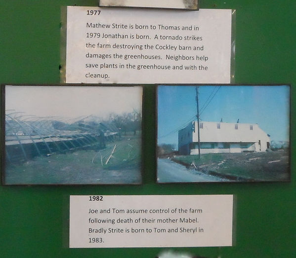 1977 a tornado strkes the arm destroying the Cokl barn anddamaging the greenhouses.