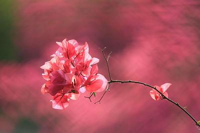 馬路旁的一支花