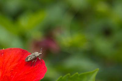 難得找到小蟲,在大紅花上休息