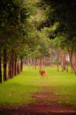 廣闊的領域,只留下野狗的背影