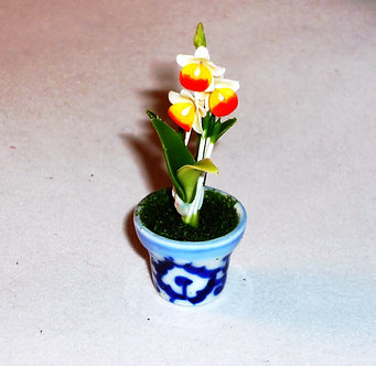 Red & Yellow Lady Slipper Flower - Blue & White Pot