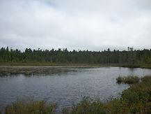 Overdale Environmental Inc. Wetland Delination, Rare Plant Surveys