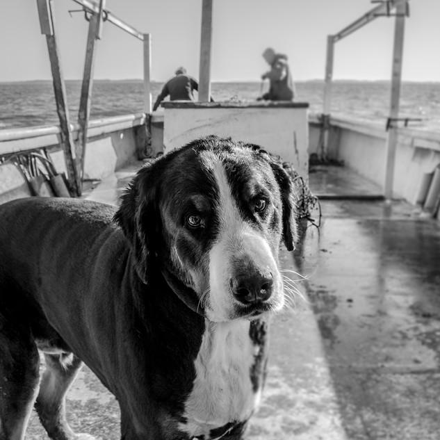 Ruehrmund_Dog_Watermen_Publish.jpg