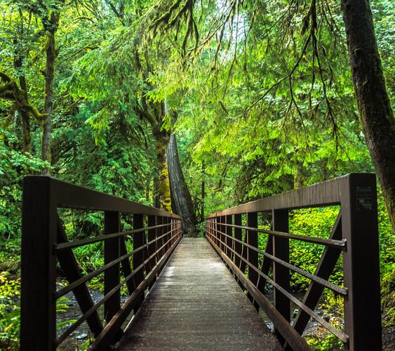 Marymere Falls Bridge