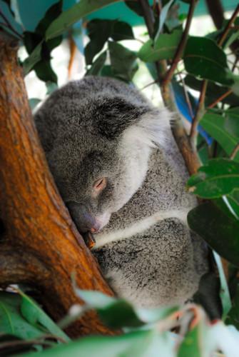 Magnetic Island, Townsville, Australia