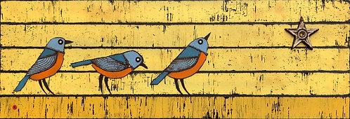 Star Birds