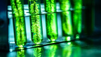 Biopaliwa trzeciej generacji. Glony to przyszłość, czy wysokie koszty?