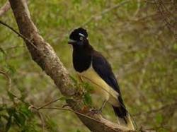 Parque nacional El palmar4