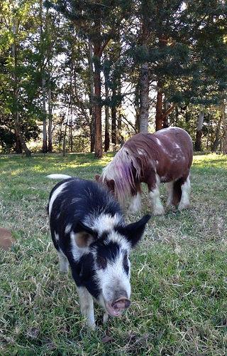 Kings Creek Retreat - Best Group Farmsta
