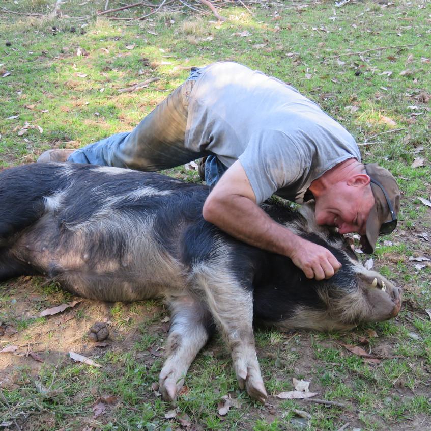 Farmstay Animals - Kings Creek Retreat (10)