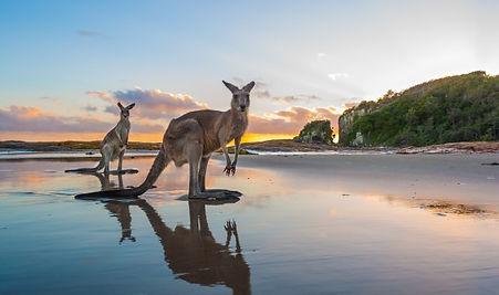 The-Legendary-Pacific-Coast-Crowdy-Bay-N