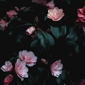 Flowers Image.png