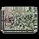 Thumbnail: Spearmint 00.1 Canvas