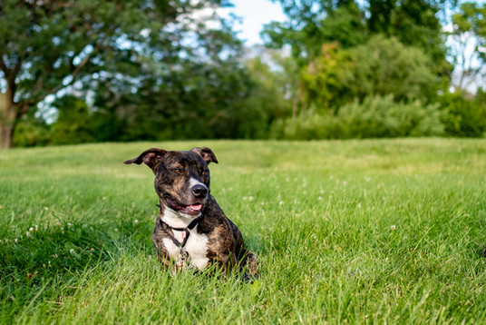 Rescue pup photography