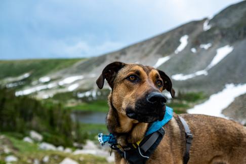 Denver pup photographer
