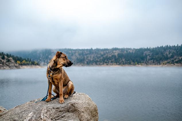 Mountain pup taking it in