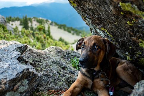 Colorado mountain pup
