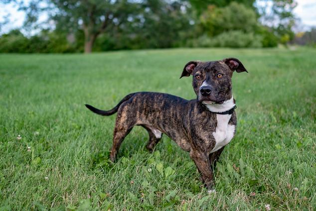 Rescue pup photographer