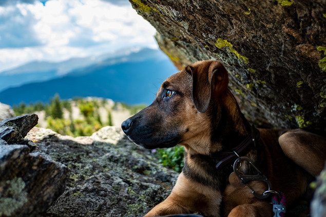 Colorado mountain dog photographer