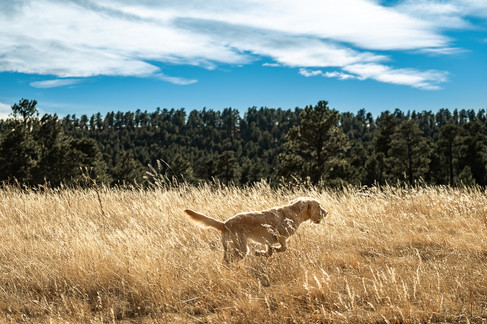 Dog on the prowl