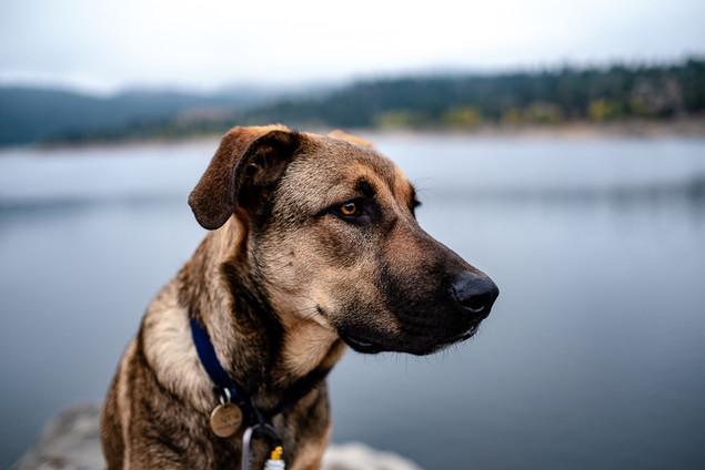 Pup Profile