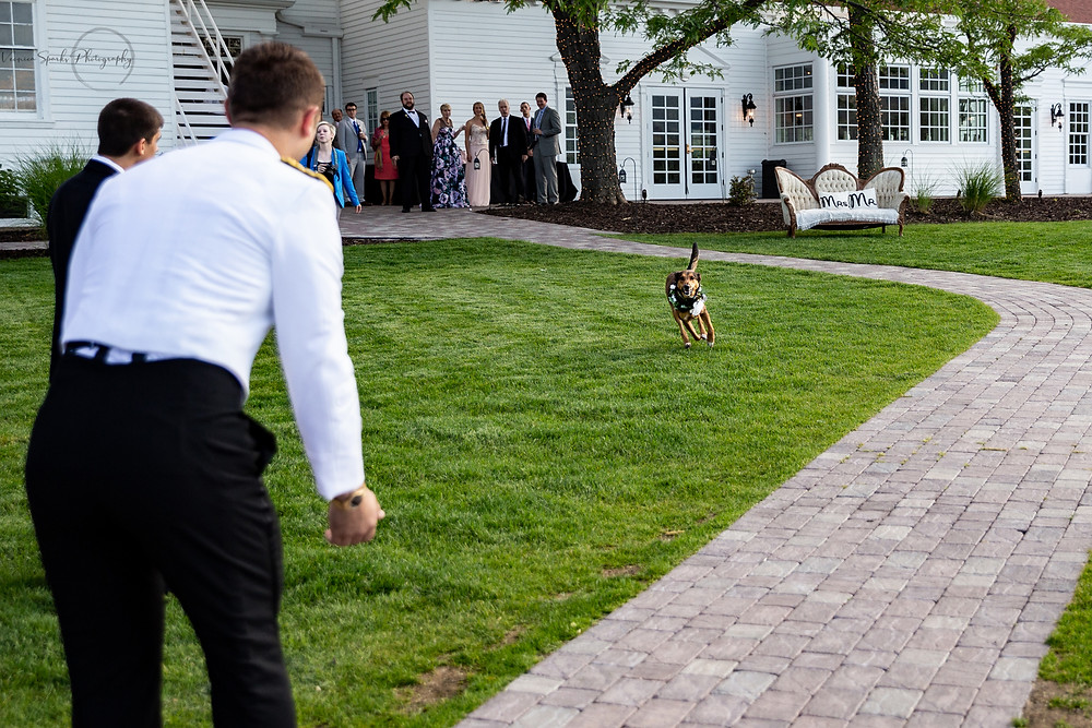 Wedding pup, running to her human