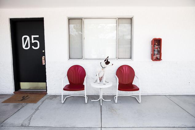Colorado Model Dog