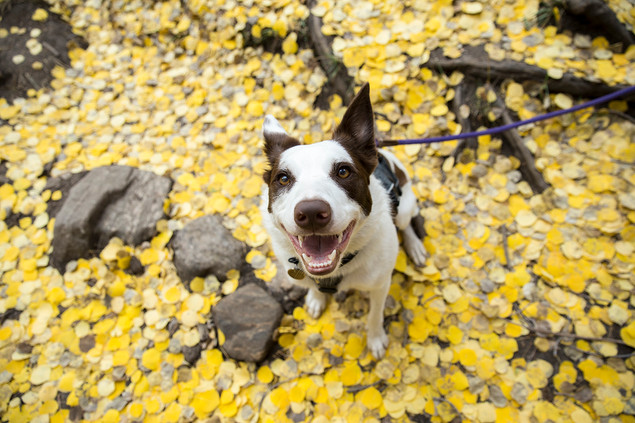Happy autumn pup