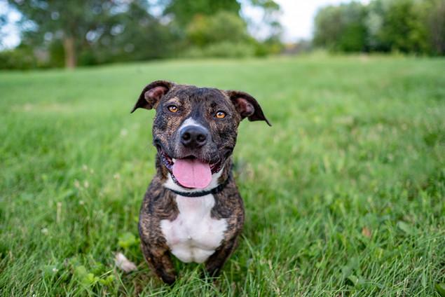 Rescue pup portrait