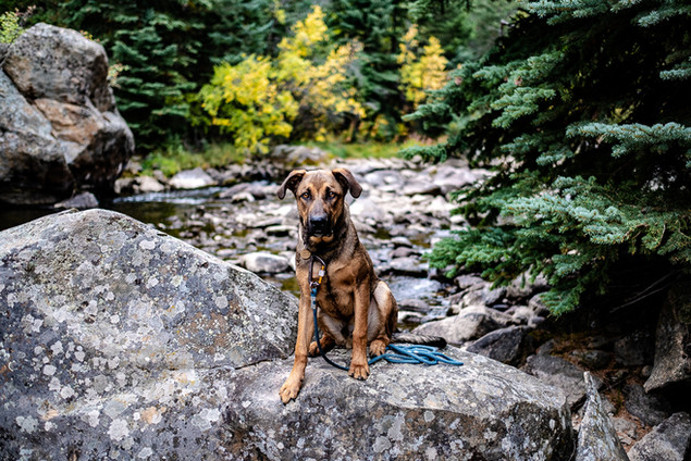 Denver pup in the mountains