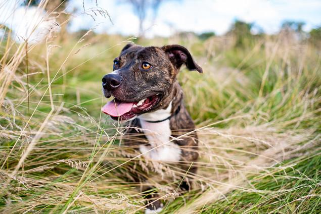 Denver Rescue dog photo
