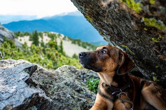 Colorado mountain pup photographer