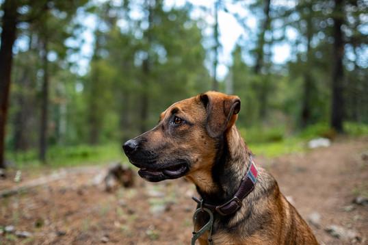 Colorado rescue pup photographer