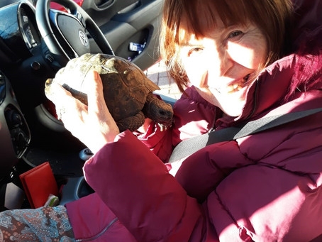 Meeting Terry the Tortoise