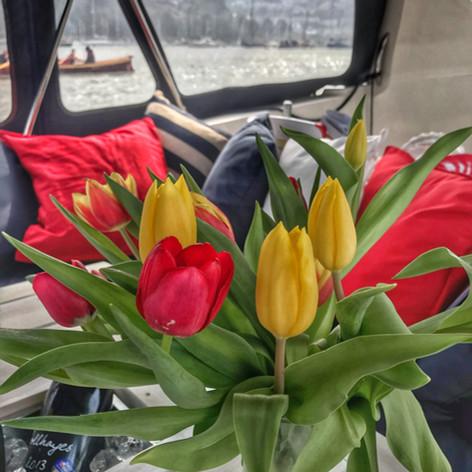 Lovely fresh tulips