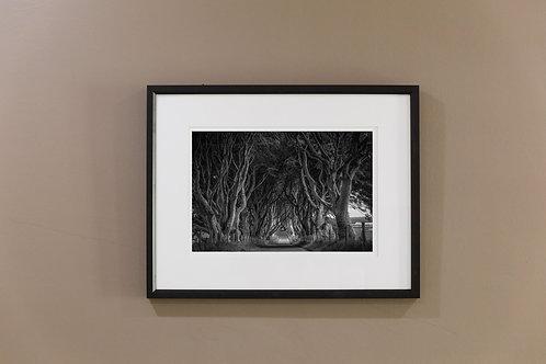 Dark Hedges Print