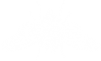 cicadawhite.png
