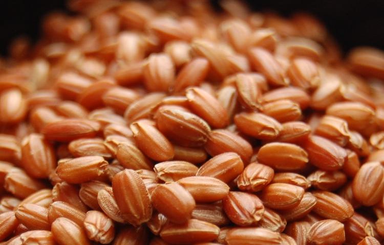 Red Rice (Aka-mai)