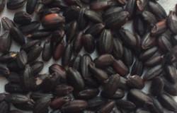 Black Rice (Kuro-mai)