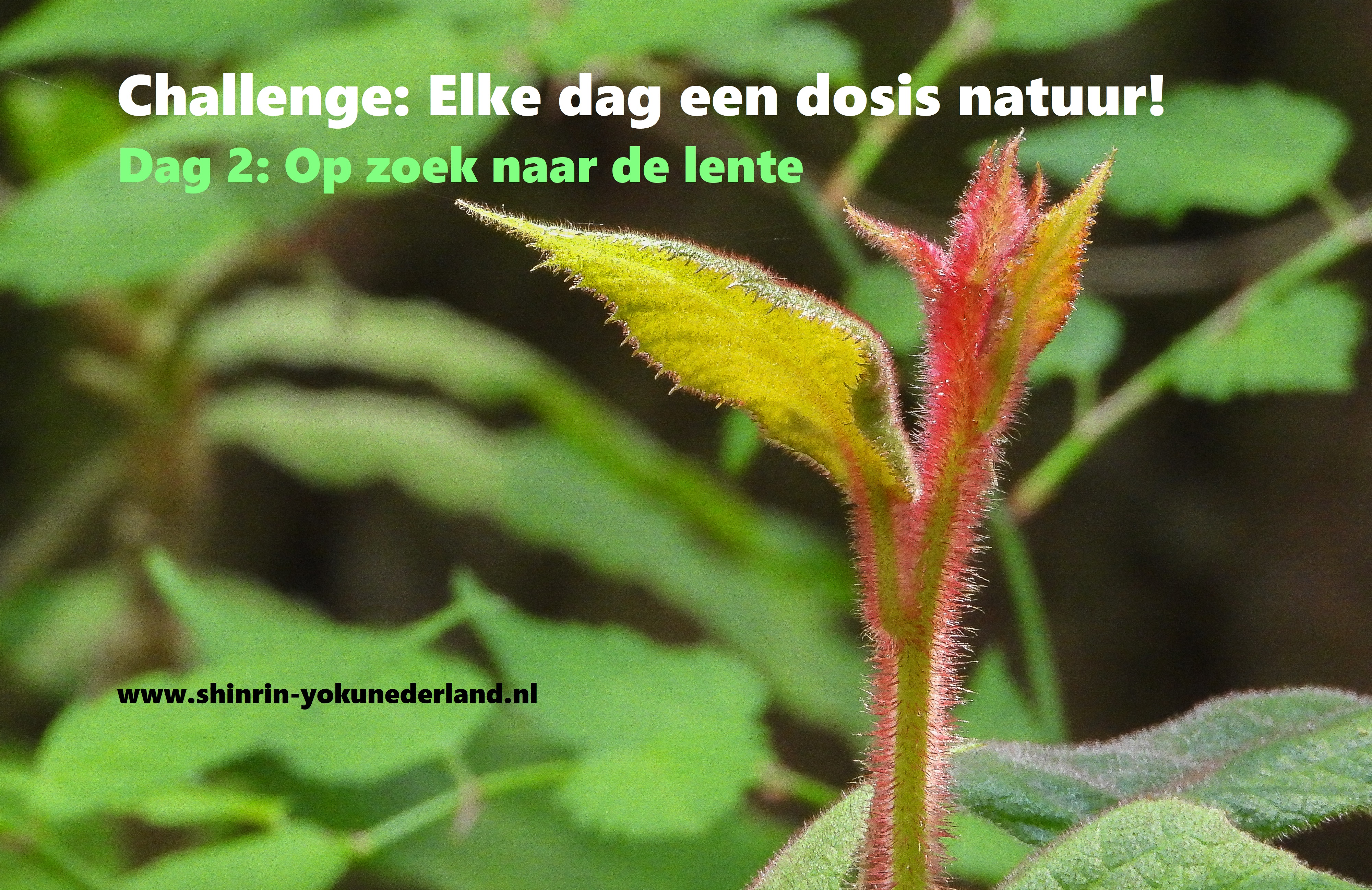 Challenge dag 2: Op zoek naar de lente