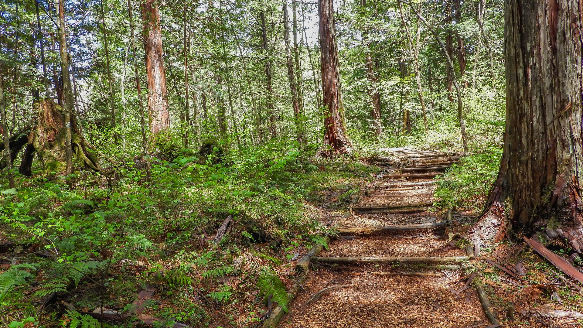 Akasawa Forest, Japan