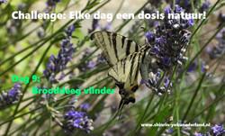 Challenge dag 9: Brooddeeg vlinder