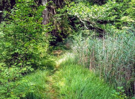 Onderzoek Natuurtherapie voor stress-gerelateerde ziektes bij het tuinproject Nacadia in Denemarken