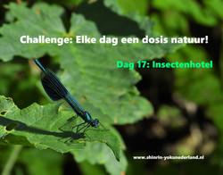 Challenge dag 17: Insectenhotel