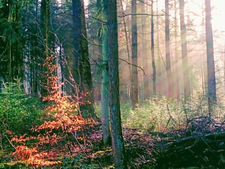 Natuurtherapie goed voor mens en portemonnee