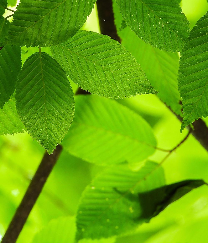 Heerlijk om je omringd te voelen door de frisse groenheid van de natuur: tot in detail de nerven van een blad volgen, maar ook de algehele groenheid om je heen voelen. Shinrin-yoku is het opnemen van de atmosfeer van het bos met al je zintuigen.